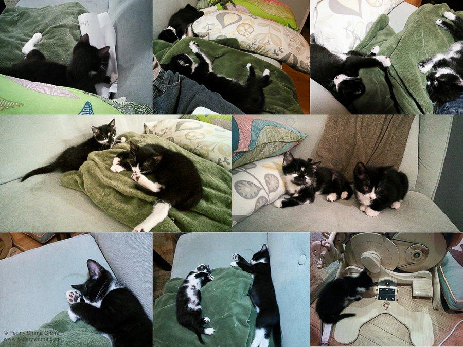 2014-08-22-kittens