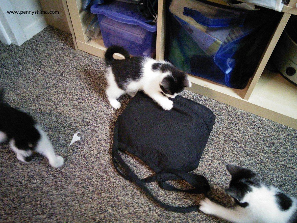 Tom Bihn Little Swift with kittens