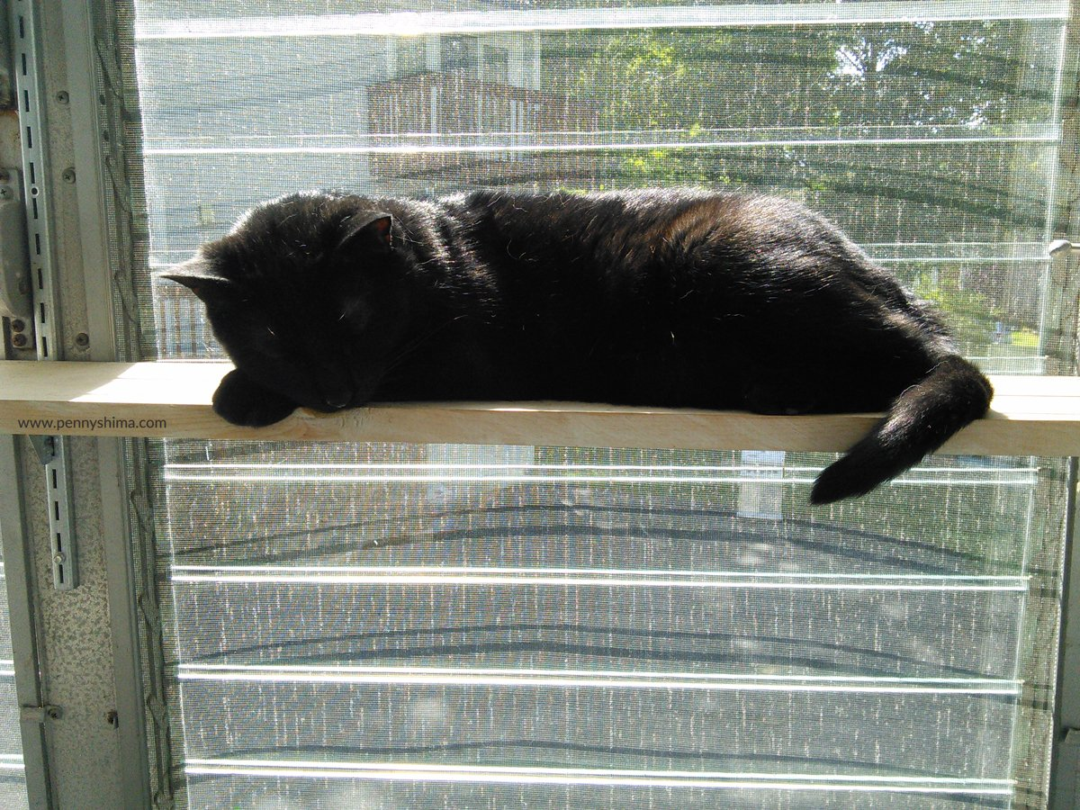 Shadow-nap