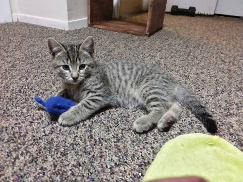 kittens, cats, boxes, and toys