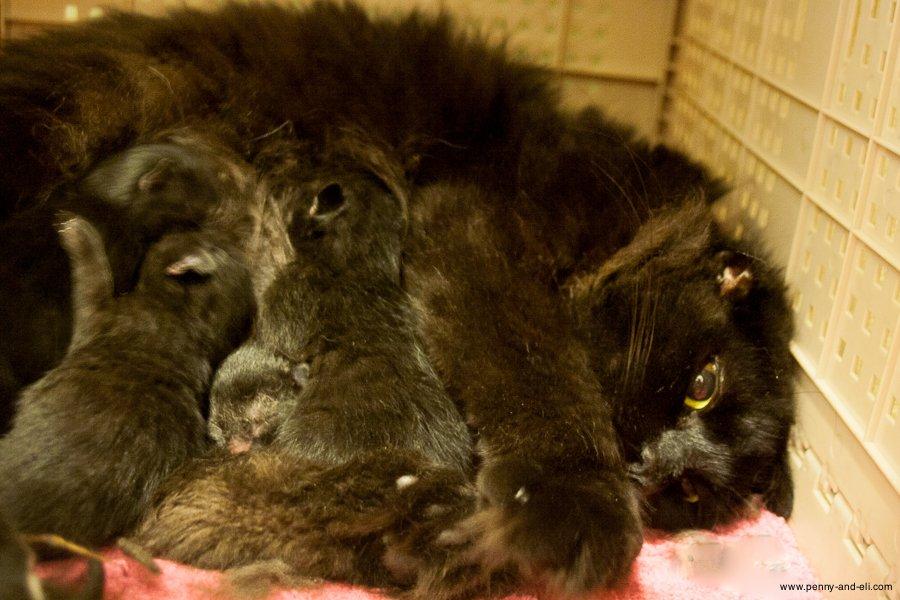 2014-05-23-new-kitten-mama
