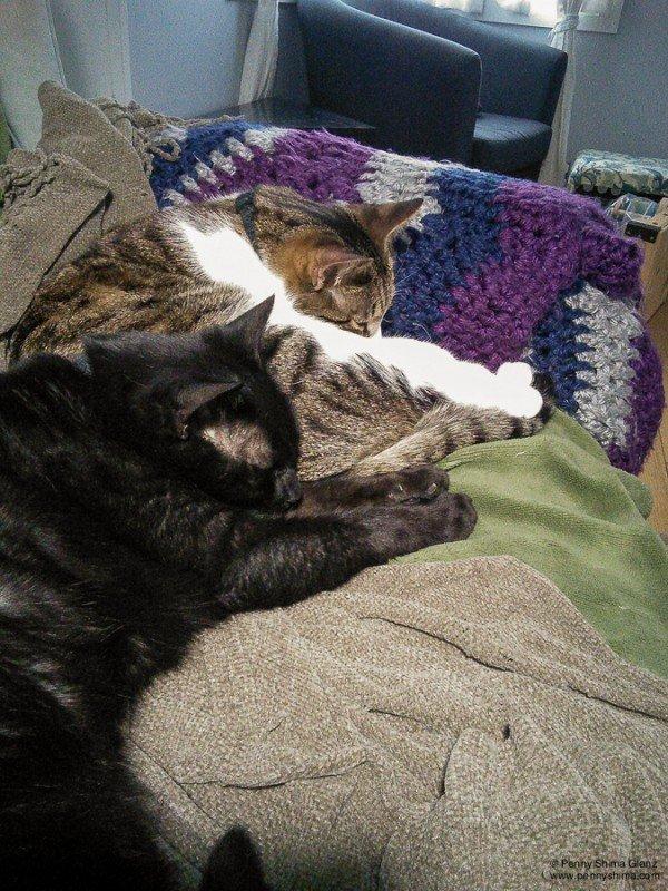 kitten luck & love