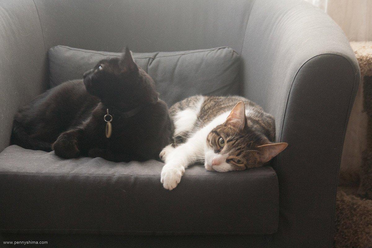 love is Shadow & Buddy
