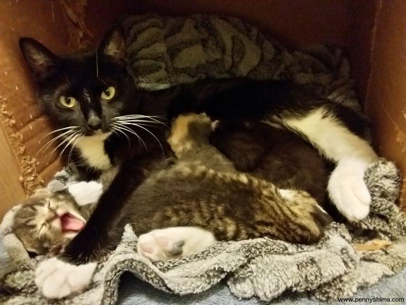kitten season!