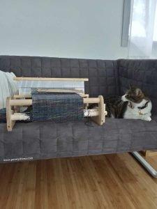 Photo of Buddy cat yawning while facing loom