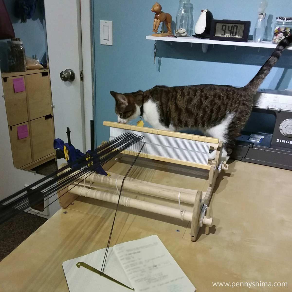 Buddy cat helps warp a rigid heddle loom.