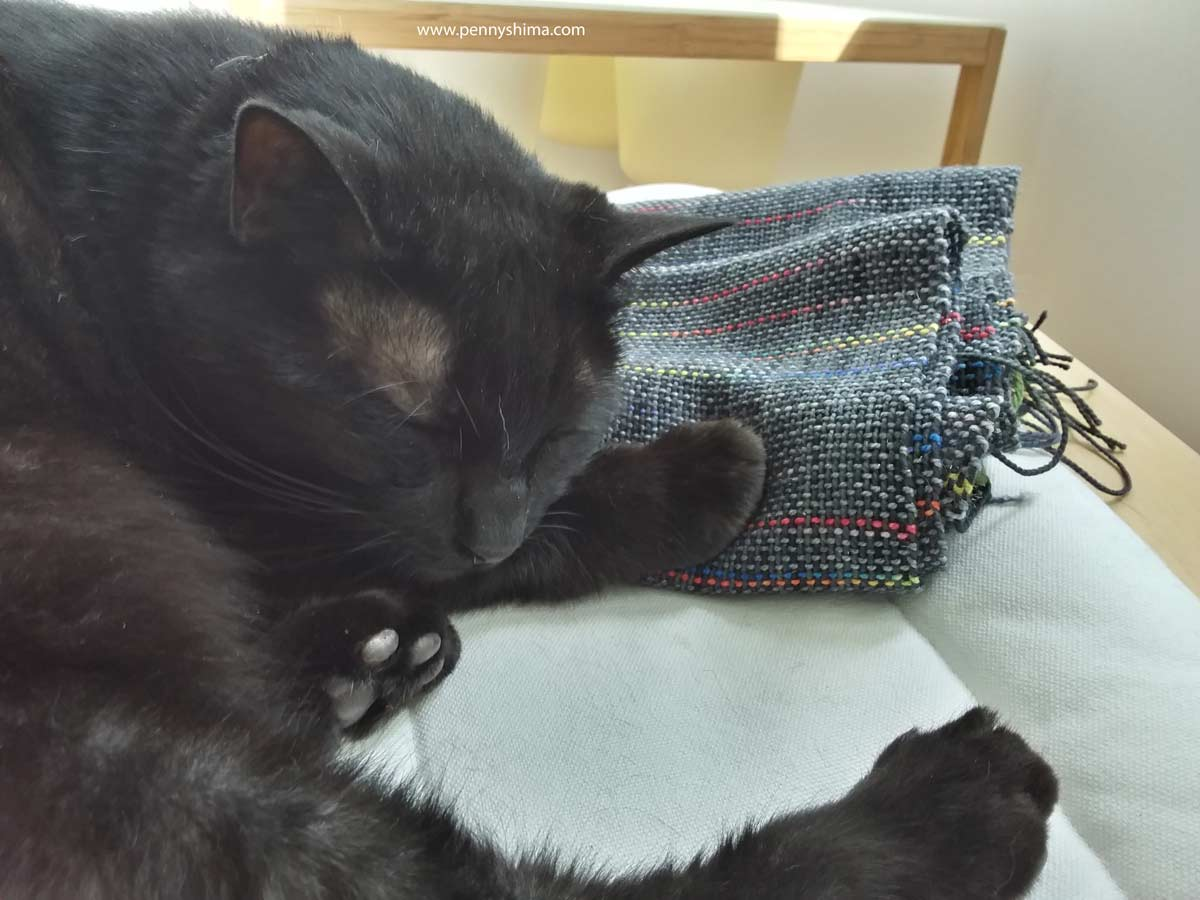 Shadow cat asleep on folded woven fabric.