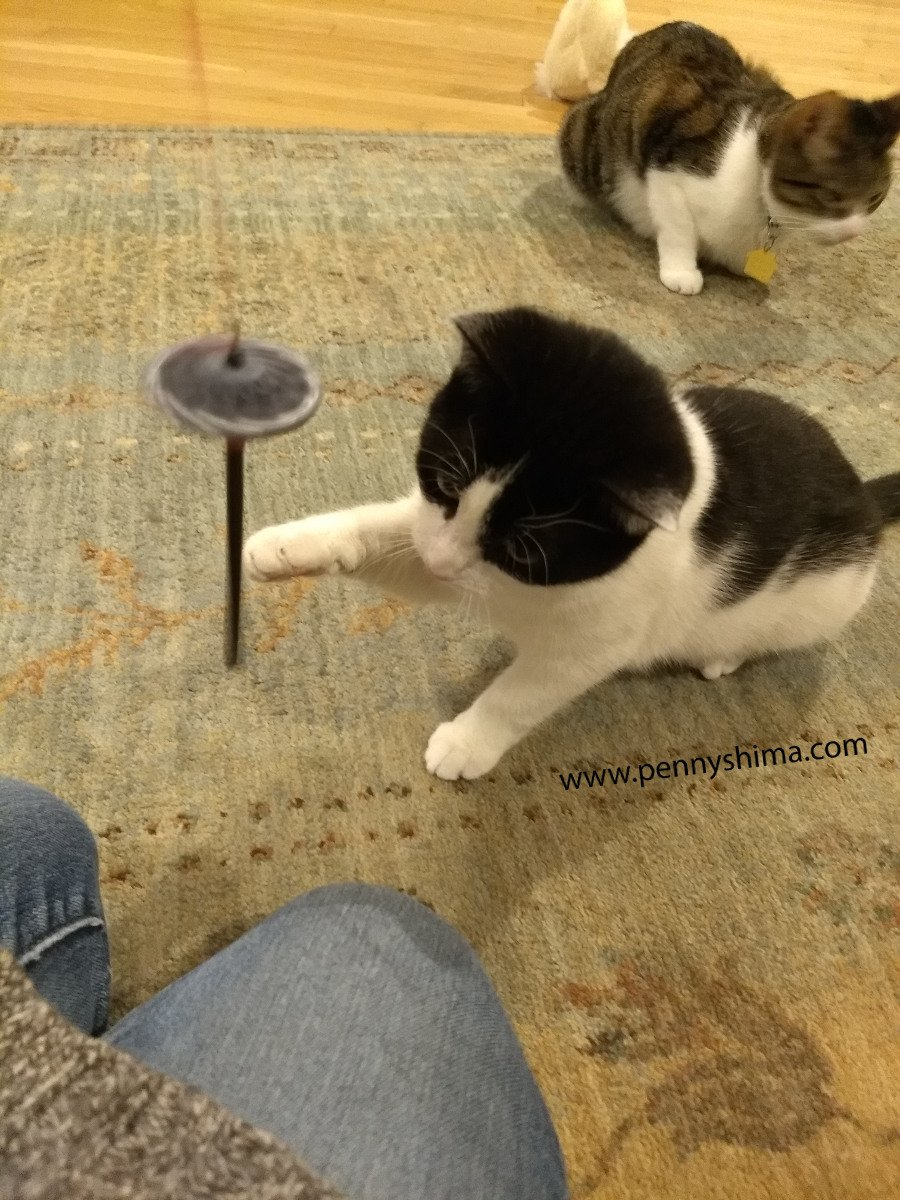 Foster Kitten playing with a hand spindle