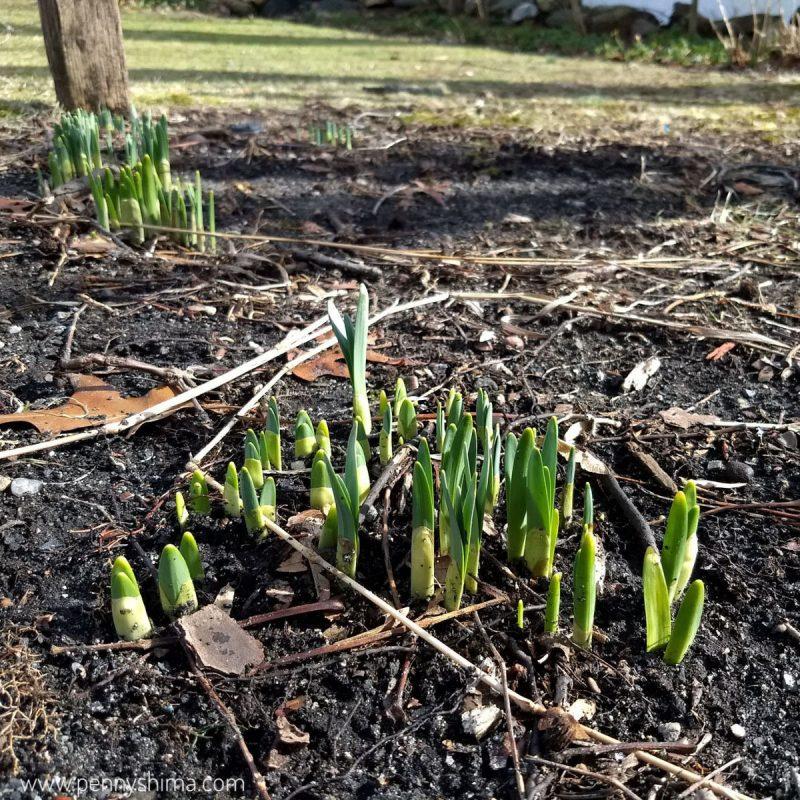 soon spring soon