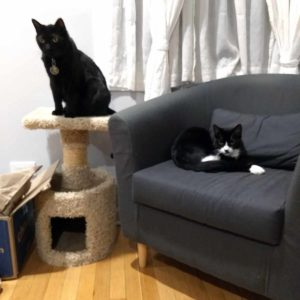 Black cat on cat tree; black & white curled up on an armchair