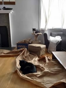 a black cat laying on packing paper and a black and white cat sitting on top of a cat tree in corner of sunny living room