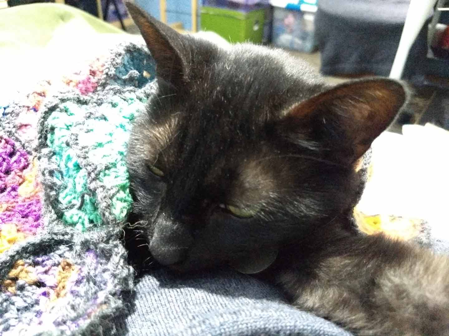 Black cat under crochet blanket on top of grey sweater snuggling his human.