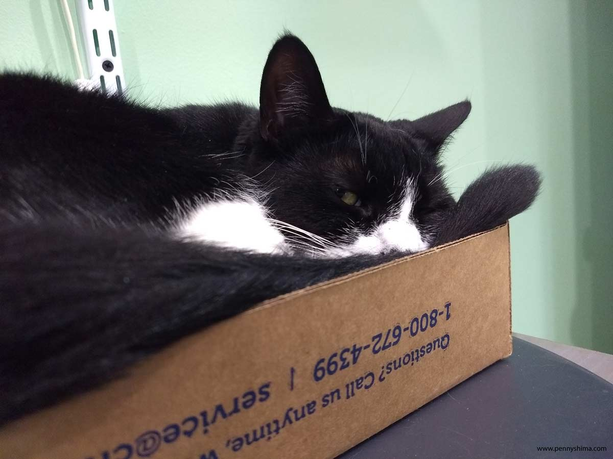 B&W kitten (~16 months) napping in a box on a desk