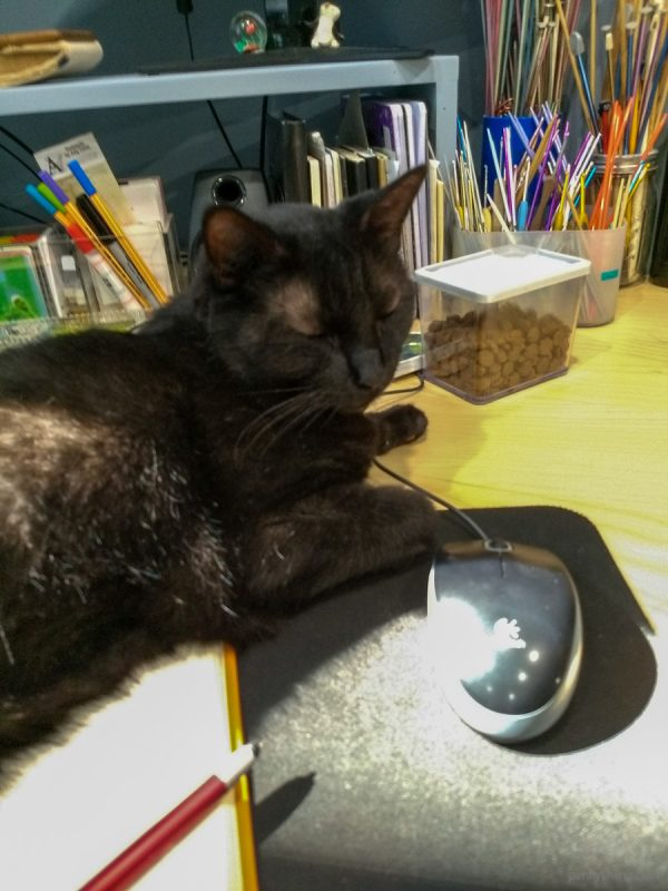 Shadow napping on the keyboard with mouse wire near his paw.