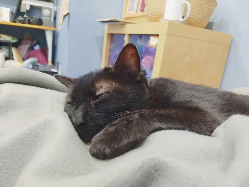 Black cat napping on light grey fleece blanket.