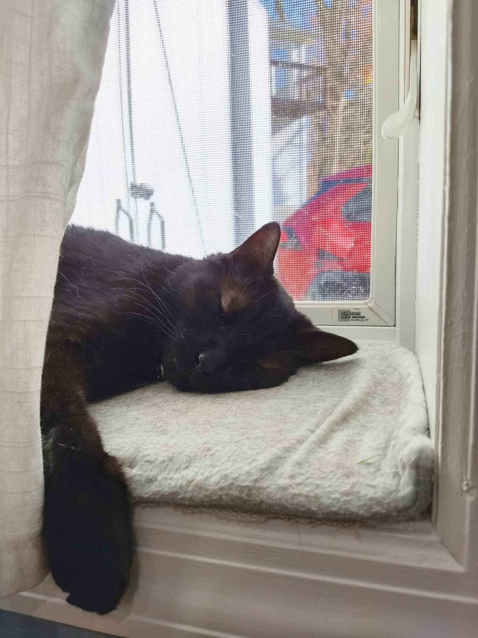 Black cat napping on windowsill with one paw hanging off.
