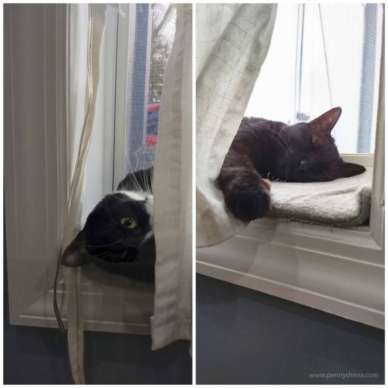 Collage of two photos of cats on a windowsill. On left is tuxedo cat (Dot) peaking out from behind window curtain mostly upside down. She likes the perspective she discovered this way. On the right is a black cat (Shadow) napping with a paw holding back the curtain. Both cats were not there at the same time.