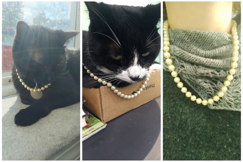 Black cat on sunny windowsill, tuxedo cat sitting in a cardboard tray on a desk, person wearing a grey sweater and grey handknit lace shawl all wearing a string of pearls in honor of VP Harris.
