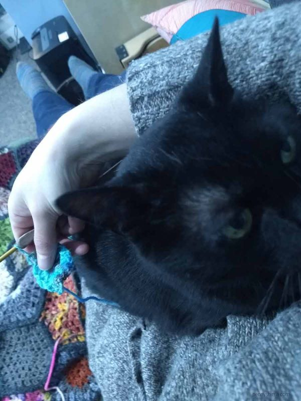Black cat snuggled into his person's arms. They are attempting to crochet a hexagon granny square. Person is wearing a brown marled sweater.