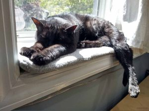 Black cat stretched out on cushion in sunny window sill. his front paws are pushed out and his head rests on them. one back leg is hanging off the edge.