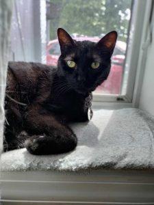 Black cat on a sunny windowsill.