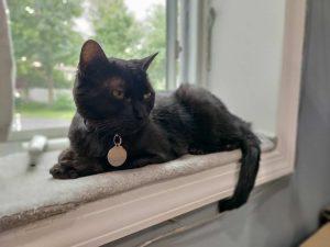 Black cat on a cushioned windowsill.