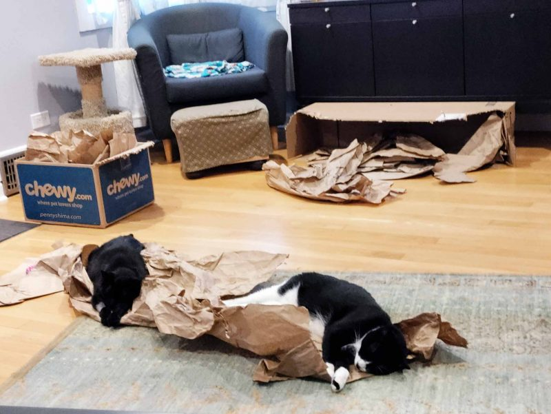 Black cat with one front leg shaved and a tuxedo cat both laying and napping on packing paper in a living room that has other cat-friendly boxes and packing paper.