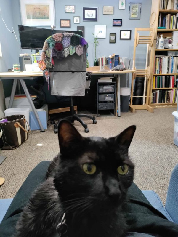 Black cat on person's lap, view of a desk in background. There is a tuxedo cat peeking out from the side of the desk chair.