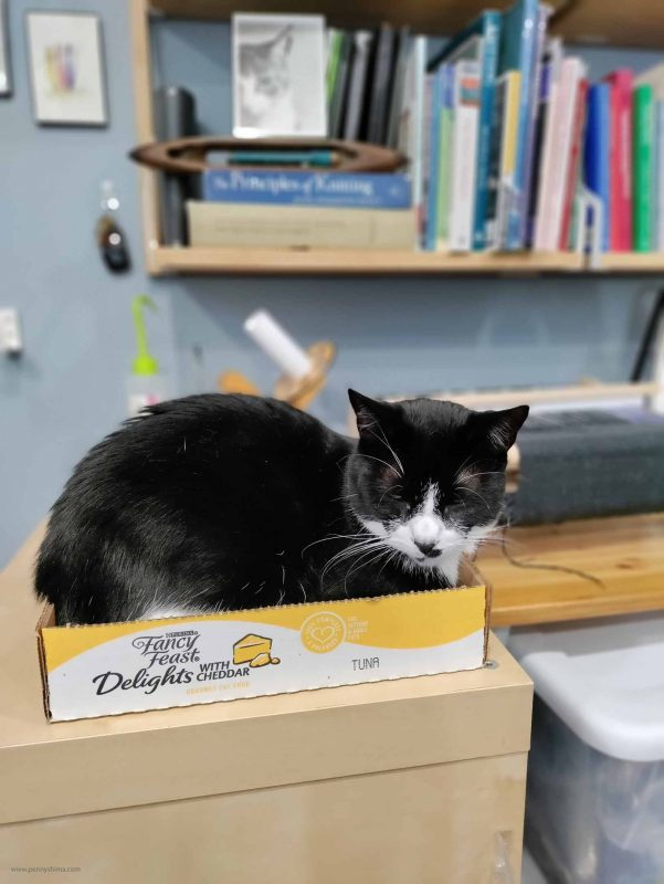 Tuxedo cat, Dot in a cat food can tray.