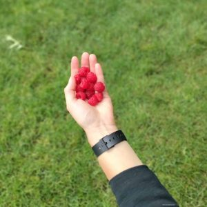 a left hand holding raspberries over a green grass lawn.